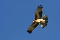 Little Eagle  Image