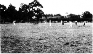 cricket_steens_paddock